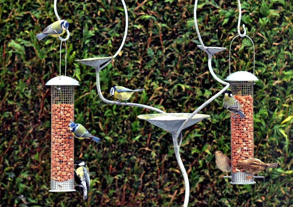 beepalace head office birds feeding feb 2015