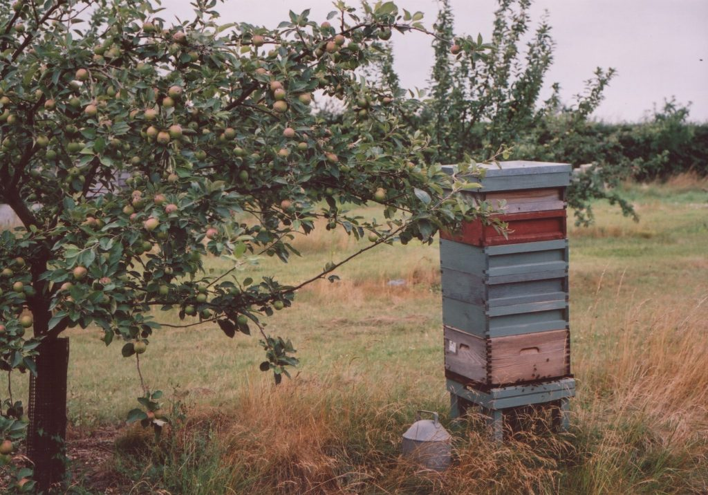 hives in orchard