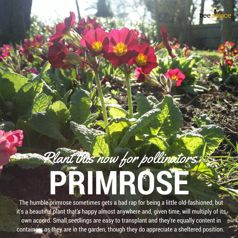 Plant this now for pollinators (3)